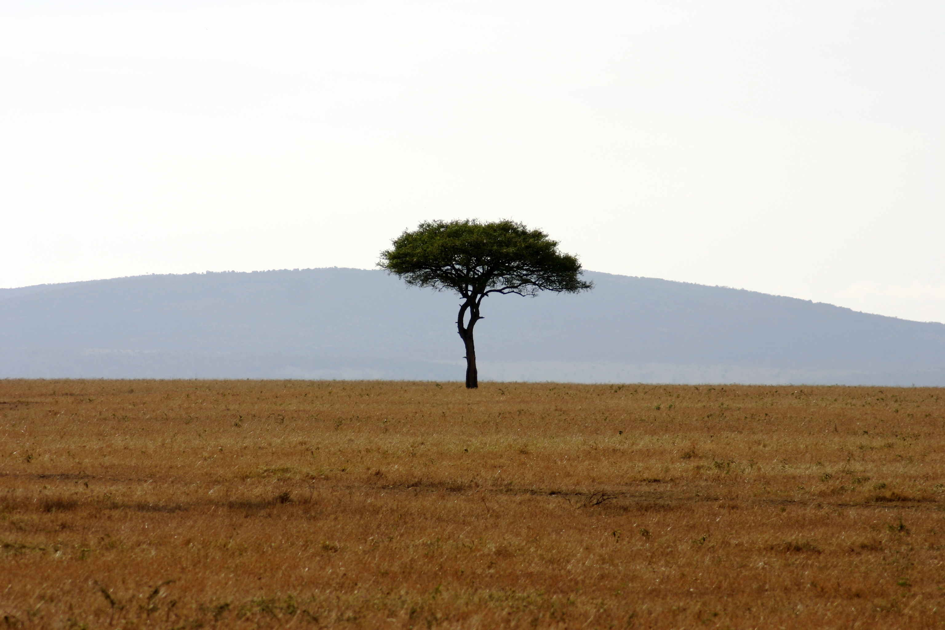 Savanna science in South Africa | EcoPress
