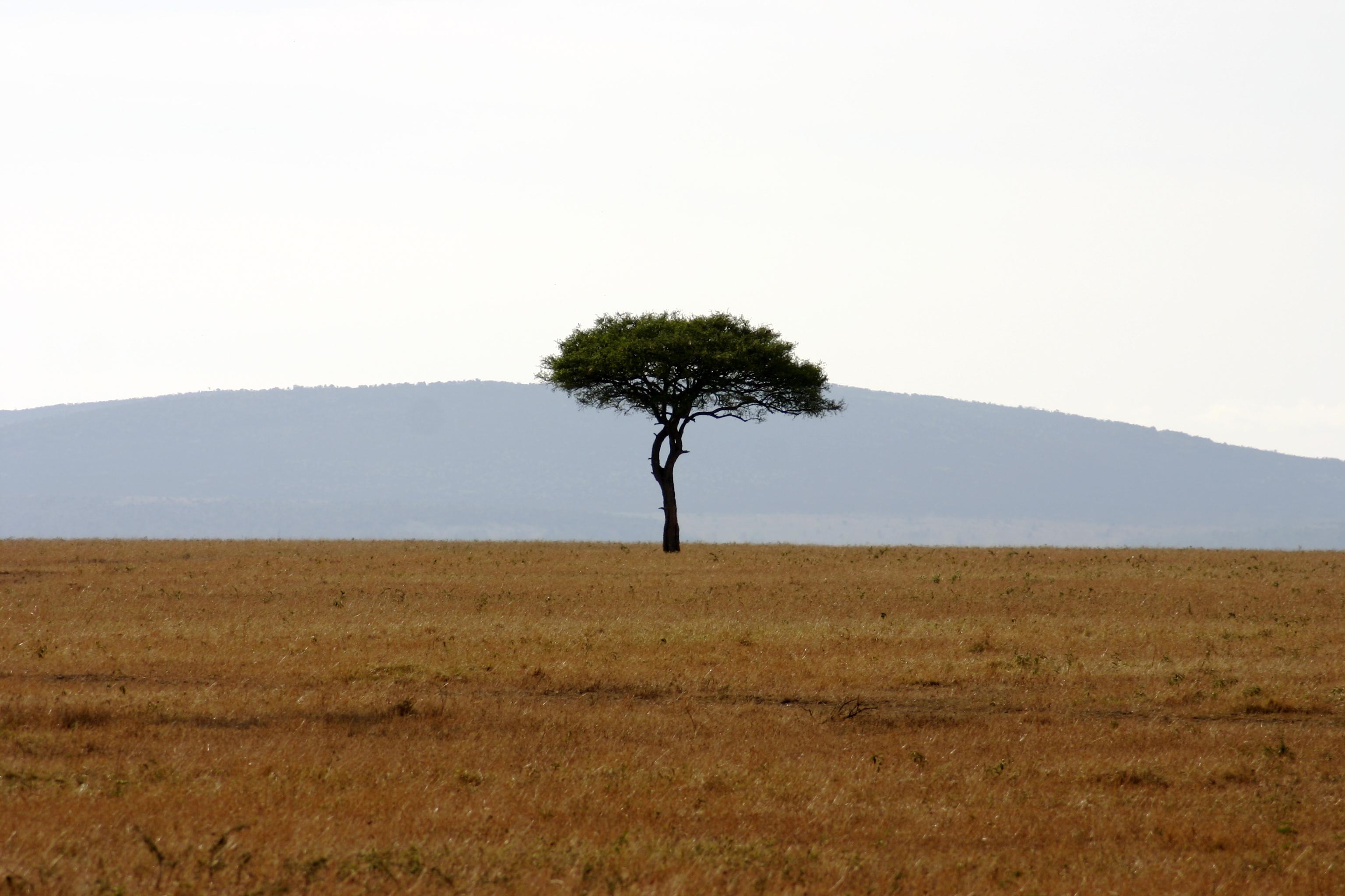 Africa Grasslands 97