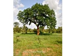 Tredennick Trees
