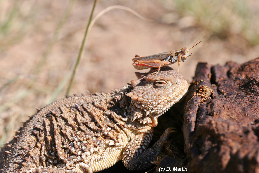 #### species with a grasshopper friend, seen at #### place on #### date