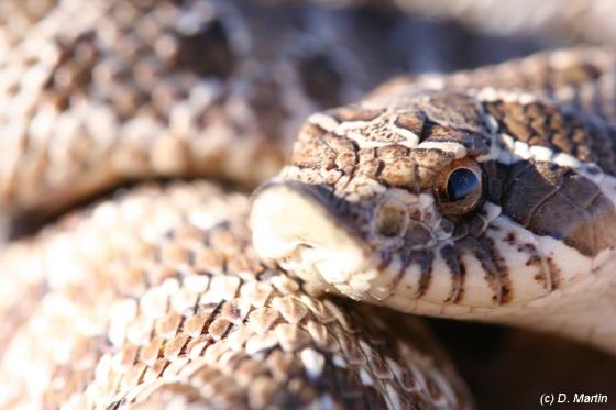 Rattlesnake photo taken at #### place on #### date.