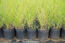 bioenergy plants