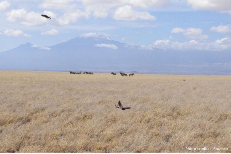 Kilimanjaro_credit