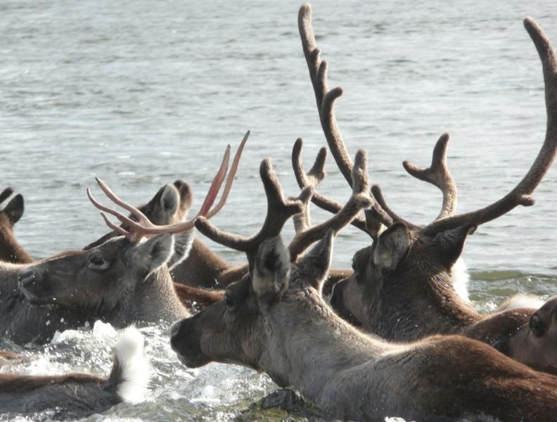 Image credit: Animal Diversity Web