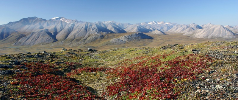 More than breathtaking scenery. Dr. Matthew Wallenstein is studying the relationship between plant growth, Arctic soil microbes, and carbon sequestration in Alaska's Brooks Range.