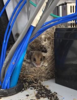 mouse_crop