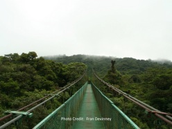 canopy over monteverde with credit